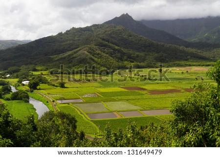 Lush taro fields as viewed from the Hanalei lookout at Kauai, Hawaii - stock photo