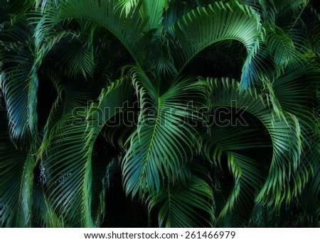 Lush tropical foliage. - stock photo