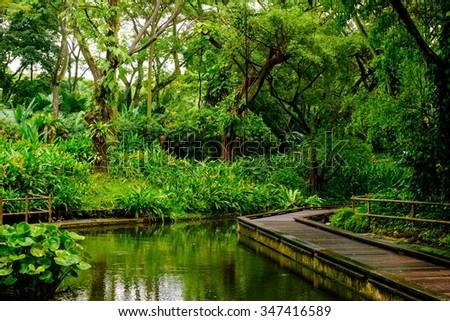 Lush tropical green jungle  - stock photo