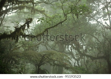 Lush tropical rain forest canopy in Costa Rica - stock photo