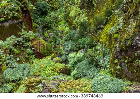 lush tropical vegetation background in madeira mountains - stock photo