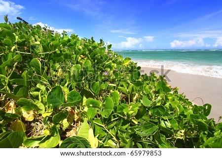 Lush vegetation grows along the coast at Anse de Sables Beach in Saint Lucia. - stock photo