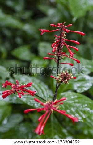 Lush vegetation in Ecuador Amazon rain forest - stock photo