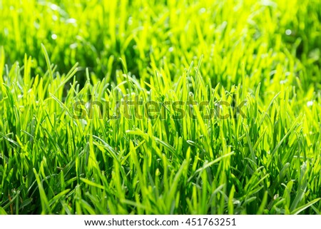 lush vibrant green grass meadow close up. Soft focus and shallow DOF photo