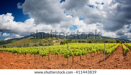 Lush vineyard in the countryside - stock photo