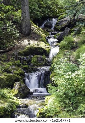 Lush Waterfall - stock photo