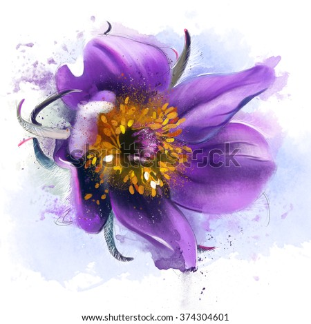 luxurious flower, sleep-grass, closeup, isolated on a white background, spray paint, watercolor illustration - stock photo