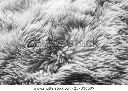 Luxurious wool texture from a white sheepskin rug in black and white - stock photo