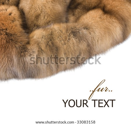 Luxury Fur:Russian Sable isolated on white - stock photo