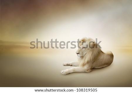 Luxury photo of white lion, the king of animals - stock photo