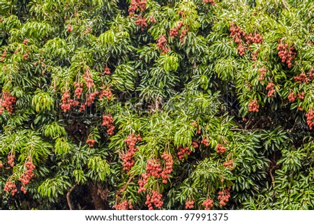 Lychees from Diego Suarez, Northern Madagascar - stock photo