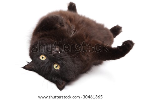 lying black cat isolated - stock photo