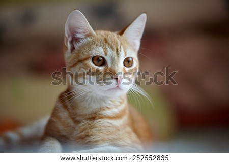 lying cat on the bed - stock photo