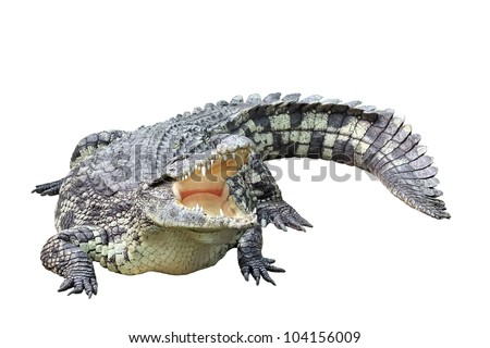 Lying crocodile isolated on white background - stock photo