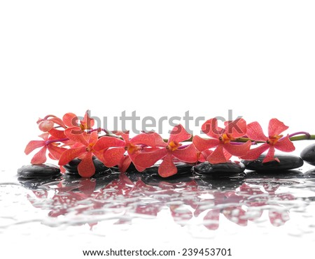 Lying down Beautiful orchid and black stones  - stock photo