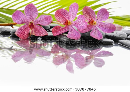 Lying down pink orchid and set of stones with palm