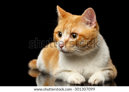 Lying Ginger Cat Surprised Looking at Left on Black Mirror background  - stock photo