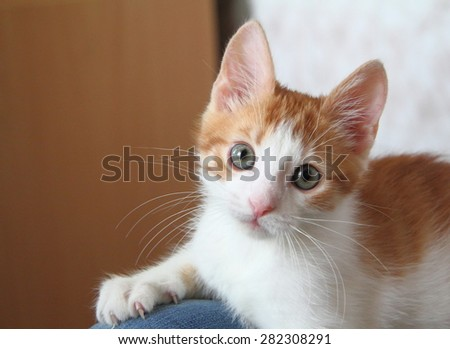 lying ginger kitten claws stuck in the human knee
