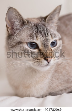 lying in bed relaxed cat - stock photo