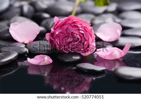 Lying on pink rose ,petals with black stones