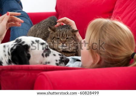 lying on red sofa young woman with  cat and dalmatian dog - stock photo