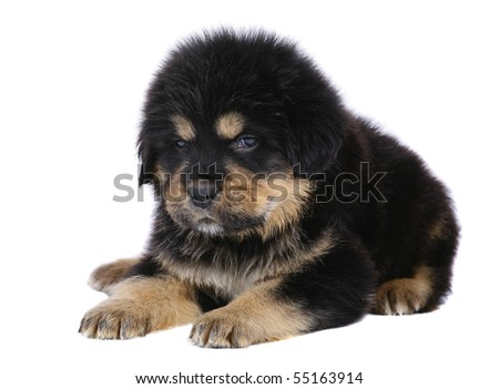 Lying pup on a white background. - stock photo