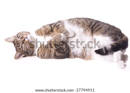 lying, sleeping cat