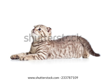 lying striped kitten cat isolated on white - stock photo