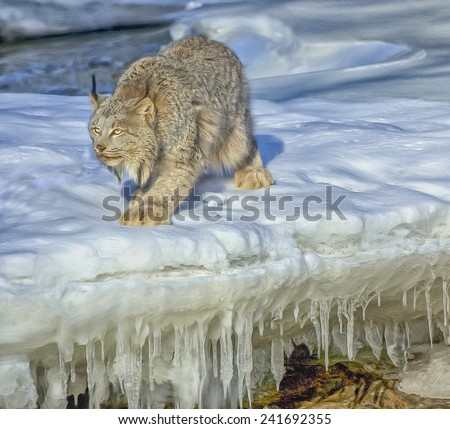 Lynx hunting on frozen river