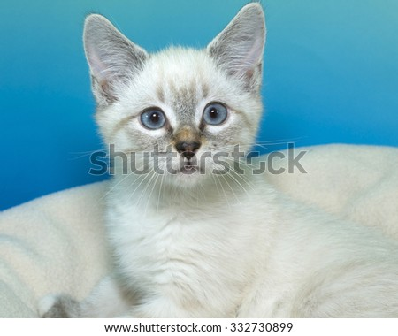 Lynx Siamese mix kitten with blue eyes laying on an off white blanket with blue green textured background looking forward - stock photo