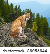 lynx  sits against wildness area - stock photo
