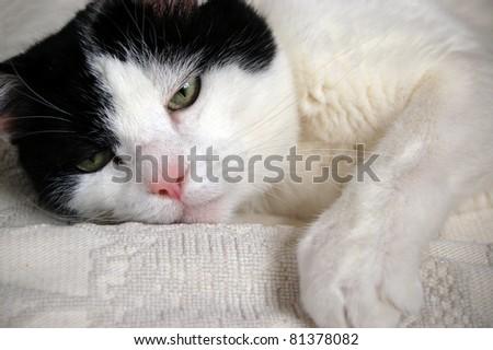 Müde Katze - stock photo