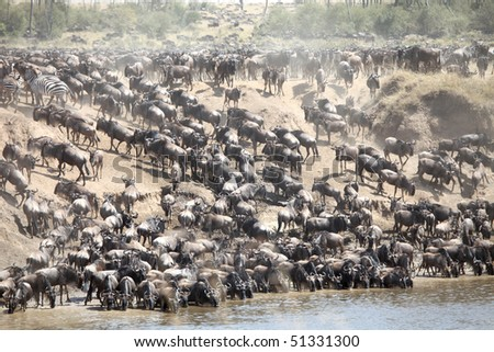 Maasai Mara Wildebeest Migration Safari, the Seventh Wonder of the world. - stock photo
