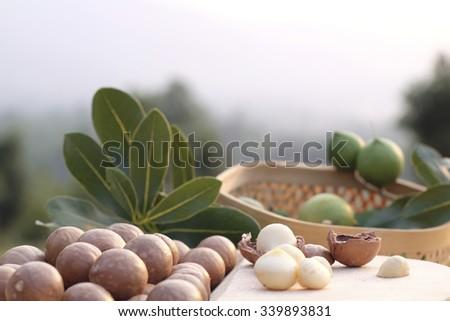 macadamia nut - stock photo