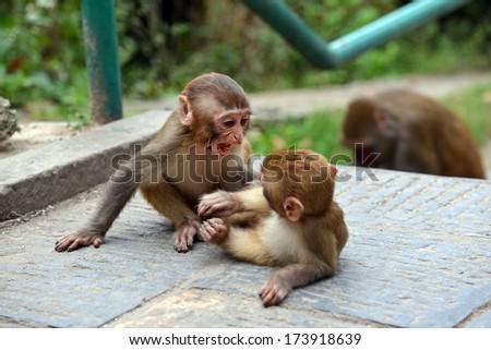 Macaque monkeys at Swayambhunath monkey temple. Kathmandu, Nepal - stock photo
