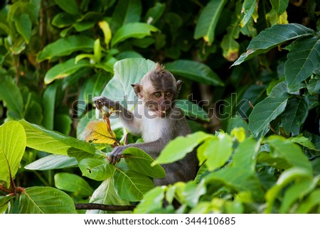 Macaque sitting on a tree. Indonesia. The island of Bali. An excellent illustration. Visible noise at 100%