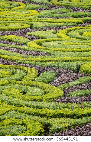 MACAU, CHINA - NOVEMBER 27, 2015: Garden hedge in front of Saint Paul's Cathedral in Macau, China. Built from 1582 to 1602, it was destroyed by a fire during a typhoon in 1835.  - stock photo