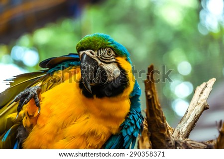 Macaw bird - stock photo