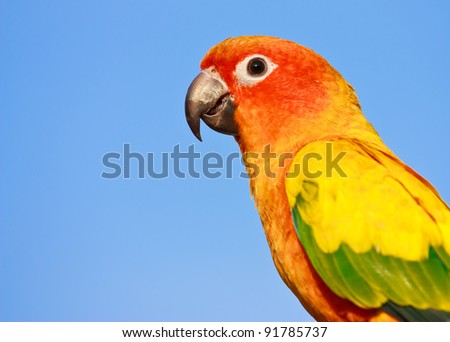 Macaw bird - stock photo