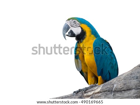 Macaw blue and yellow isolated on white background.