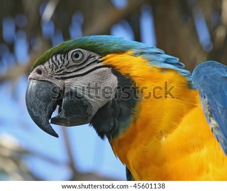 Macaw Close-up - stock photo
