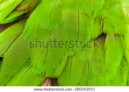 macaw feather - stock photo