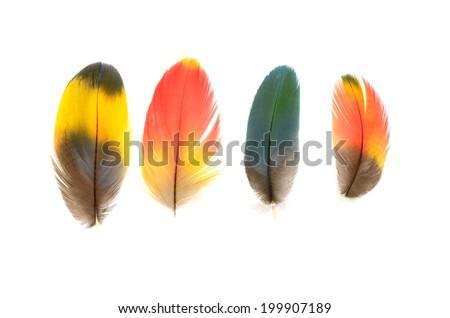 Macaw feather isolated on white background. - stock photo