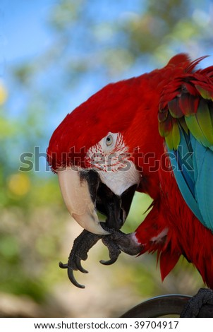 macaw in florida