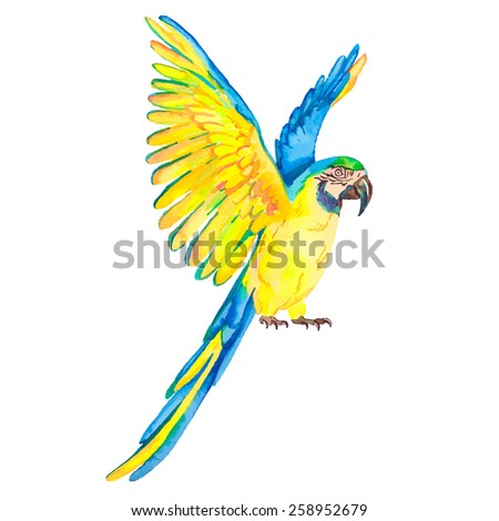 Macaw isolated on white background. Tropical parrot. Exotic.  - stock photo