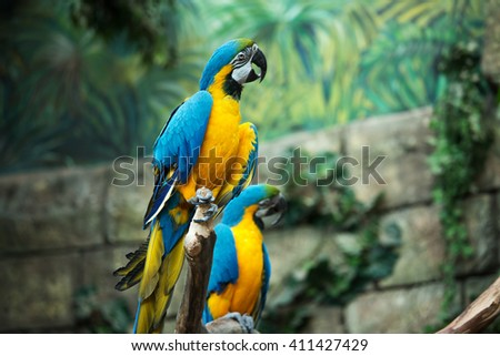 Macaw parrot cleans his paw - stock photo