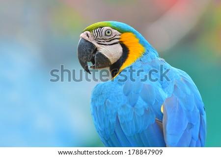 Macaw parrot closeup, nice background - stock photo