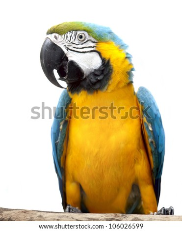 Macaw parrot isolated on white background - stock photo