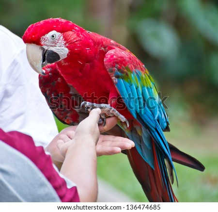 Macaw parrot on the hand