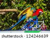 Macaw parrot show the bike at the zoo. - stock photo